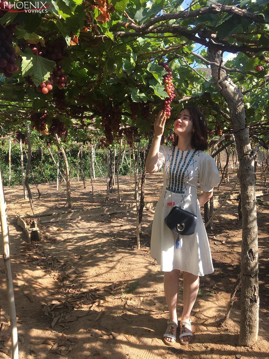 Du khách chụp ảnh tại vườn nho Thái An Ninh Thuận. Ảnh: sưu tầm.