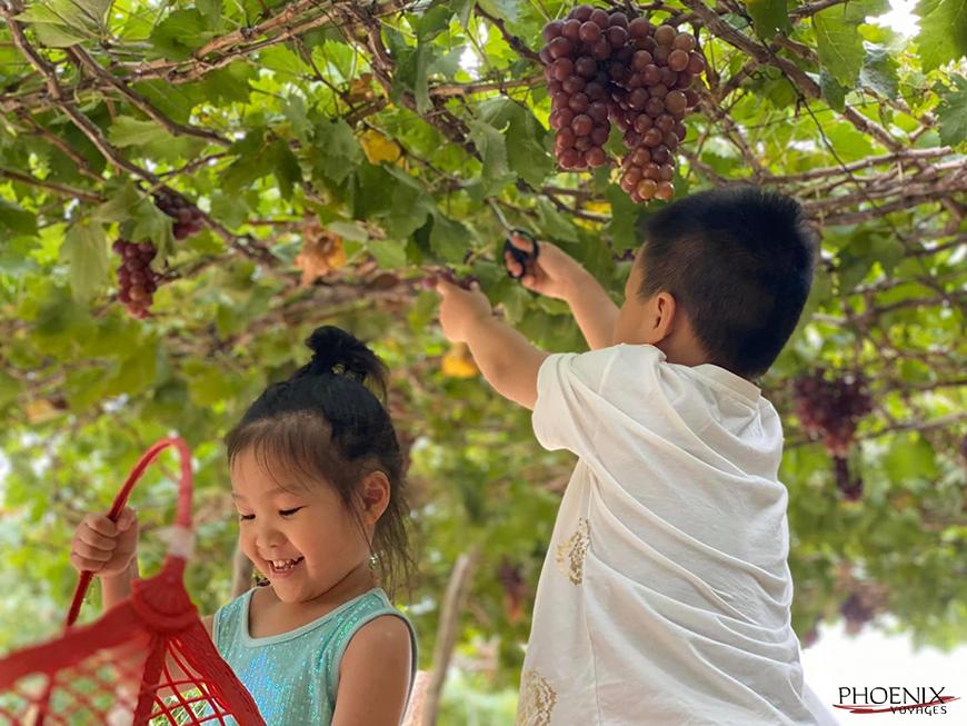 Trẻ em thoả thích vui chơi tại vườn nho Thái An Ninh Thuận. Ảnh: sưu tầm.